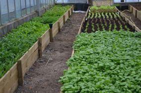 Cardiff salad garden 1